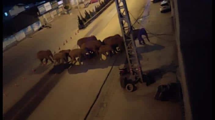 Una misteriosa marcha de elefantes está causando daños extremos en China