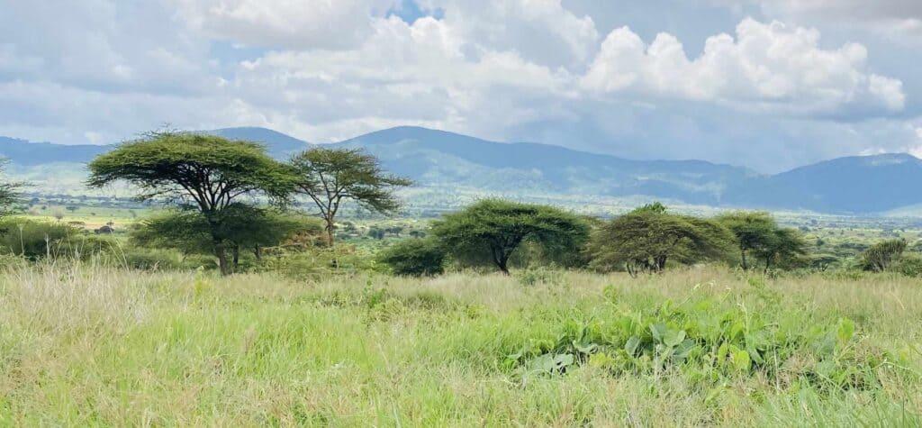 Terreno Cubierto De Verde, Así Se Vería Luego De Los Trabajos De Restauración