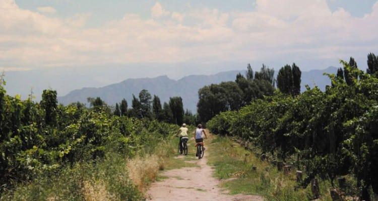 Imagen Recorrer Los Viñedos De Mendoza En Bicicleta Recorrer Vinedos En Bicicleta Mendoza 1