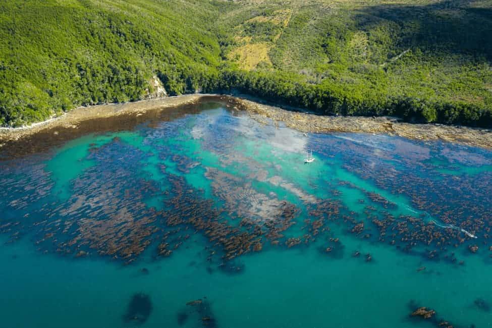 Argentina-últimos-refugios-de-kelp-del-planeta (1)