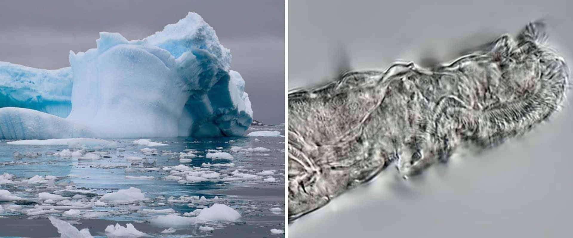 Científicos lograron revivir un animal que permaneció congelado durante 24.000 años en Siberia