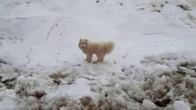 perro varado en un témpano de hielo