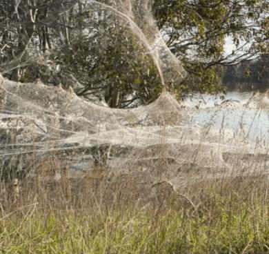Apocalipsis de las telarañas