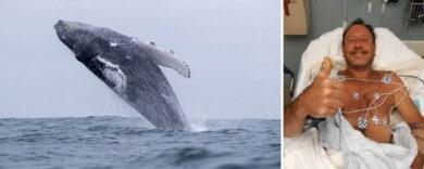 Una ballena casi se traga a un buzo, pero se arrepintió y lo devolvió a la superficie