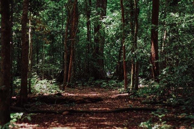 Bosque Con Camino En Medio