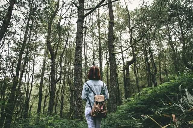 Persona En Medio De Un Bosque