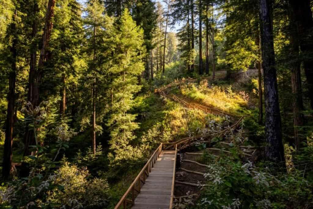 California Reabre Pfeiffer Falls Trail, Una Ruta De Senderismo Épica En Big Sur Tras 13 Años De Cierre