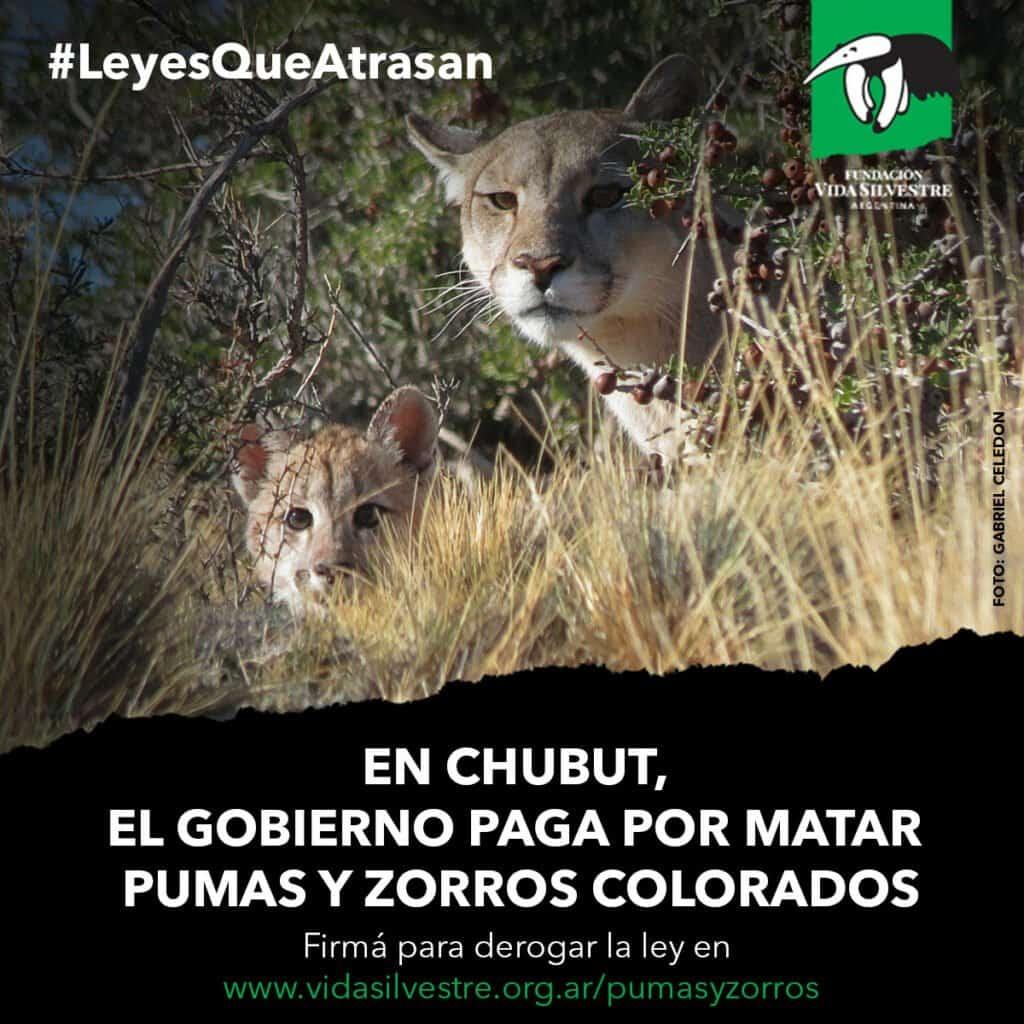 Argentina: Repudian A Autoridades De Chubut Por Fomentar La Caza De Animales Silvestres Nativos Con Incentivos Monetarios