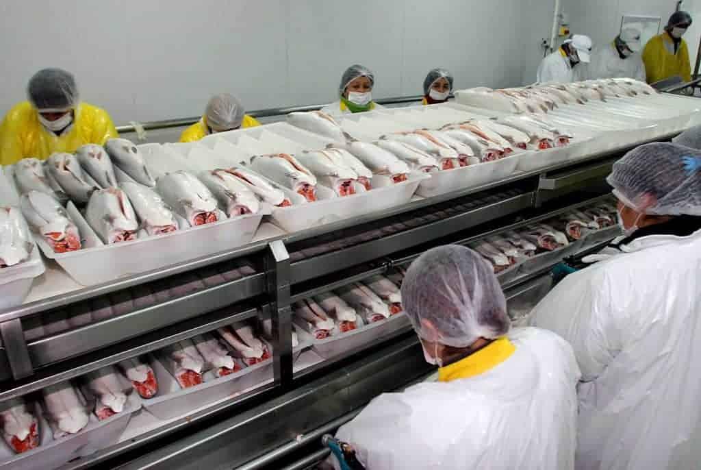 Imagen Salmonicultura En Tierra Del Fuego En El Dia Internacional Del Sushi Un Proyecto De Ley Busca Prohibir La Salmonicultura En Tierra Del Fuego