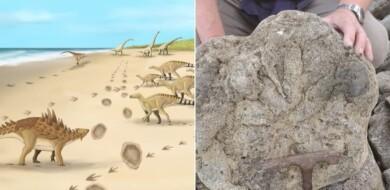 En Inglaterra encontraron las huellas fosilizadas de los últimos dinosaurios que caminaron por allí
