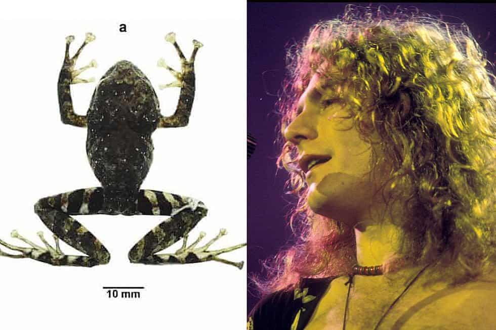 attachment-Frog-Robert-Plant