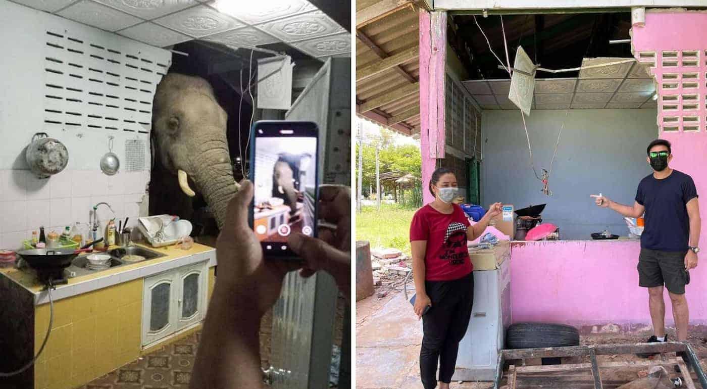 Tailandia: un elefante entró a la cocina de una casa en busca de comida