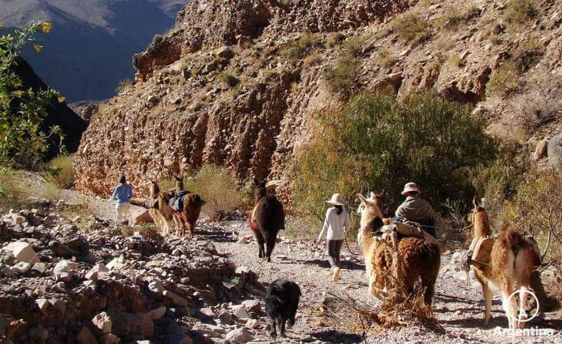 Imagen Trekking Con Llamas Llamas En Tilcara 2