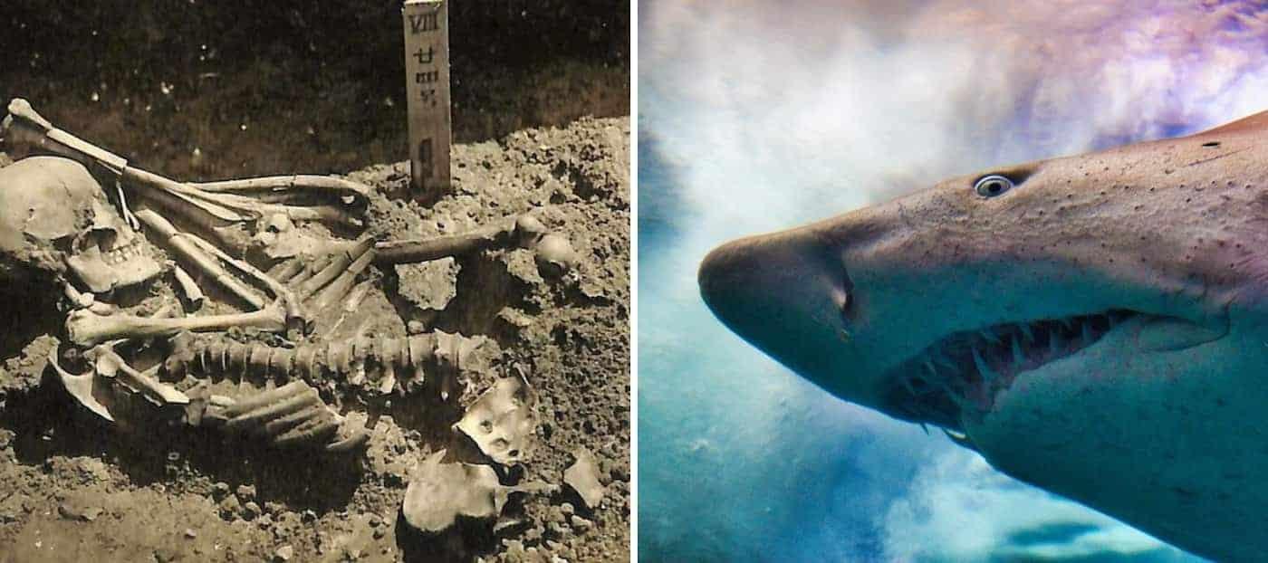Encuentran los restos más antiguos de una victima de ataque de tiburón hasta el momento, es de hace 3.000 años
