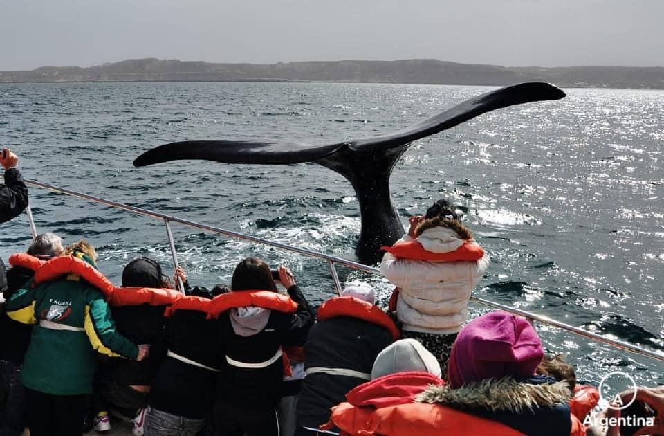 Excursión De Avistaje De Ballenas En Península Valdés