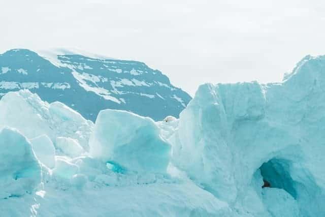 Oso Polar En El Círculo Artico