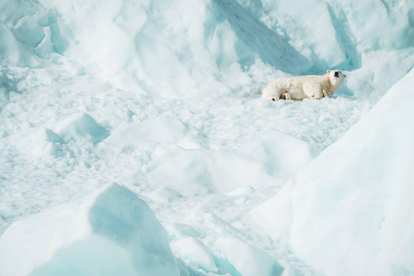 El Círculo Ártico alcanzó los 48°C en el primer día del verano boreal