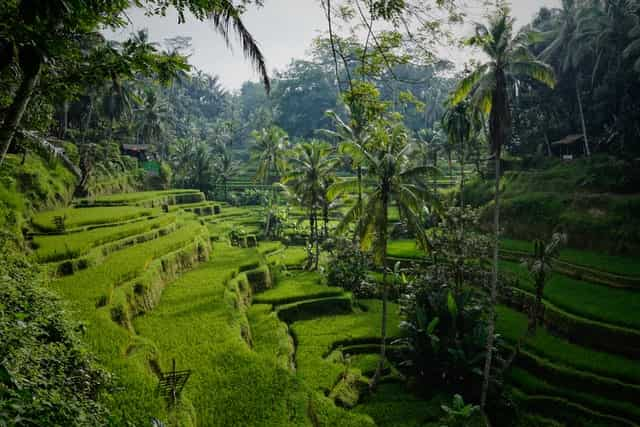 Paisaje De Bali
