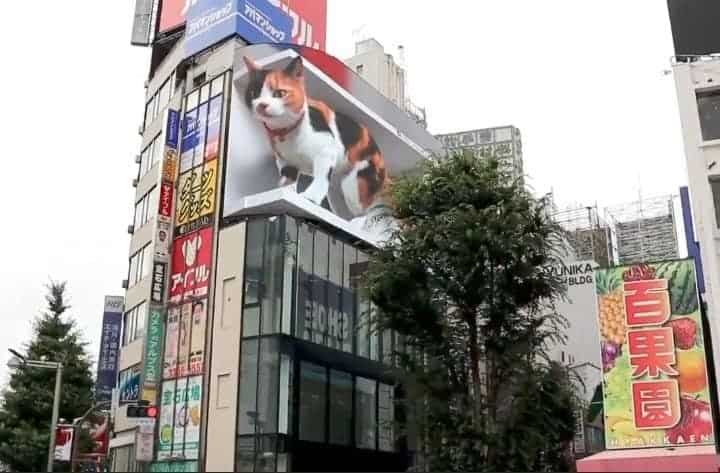 Gato Gigante En Una Publicidad De Tokio