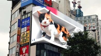 Un gato gigante es el protagonista de la publicidad de las calles de Tokio