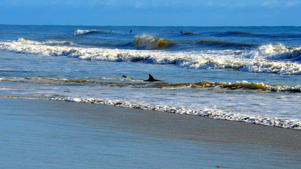 New Smyrna Beach Sharks