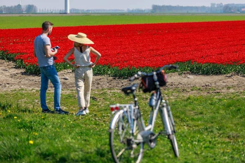Tulipanes-En-Holanda-Cómo-Llegar-A-Keukenhof