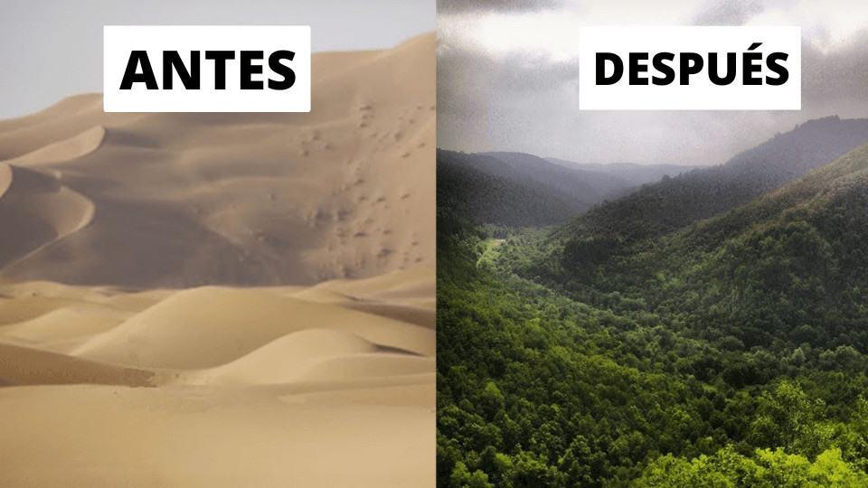 China está convirtiendo sus desiertos en bosques