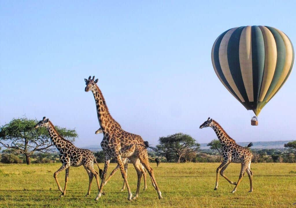 Mejor Safari Del Mundo