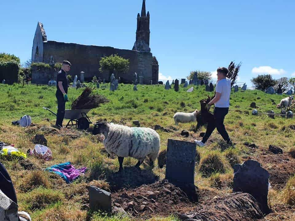 Los Cementerios Están Contratando Ovejas Para Descubrir Tumbas Históricas
