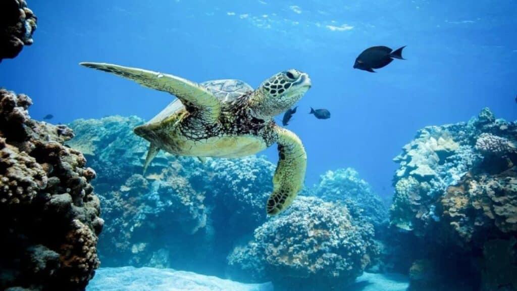 El Parlamento De Hawái Prohíbe El Uso De Cremas Solares Con Oxibenzona Y Octinoxato Para Proteger Sus Corales