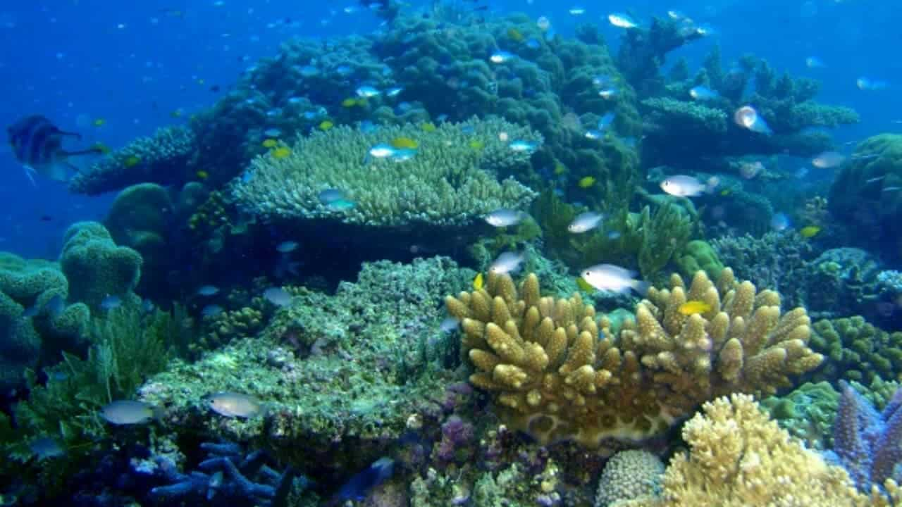 Hawái-prohíbe-uso-cremas-solares-para-proteger-sus-corales