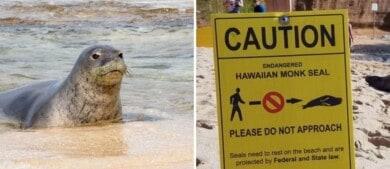Hawái: multan a dos personas con 500 dólares por tocar un animal que se encuentra en peligro de extinción