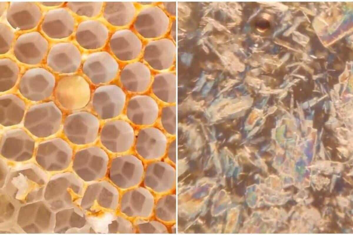 panal abeja