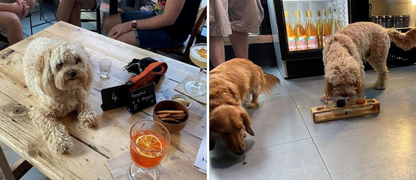 After Bark: el bar de Londres donde puedes pedir una bebida para ti y otra para tu perro