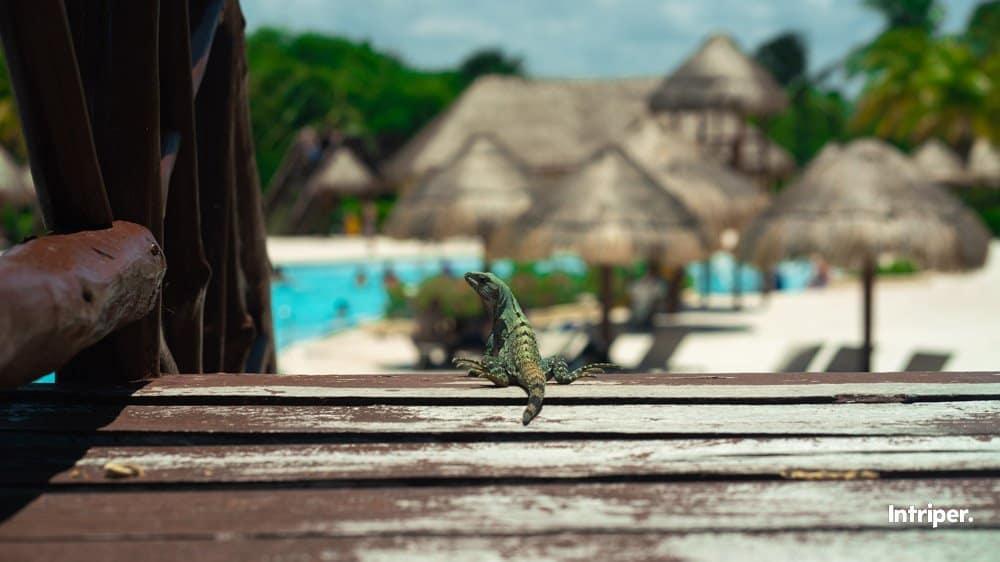 Comenzando El Día En El Hotel Grand Palladium Riviera Maya