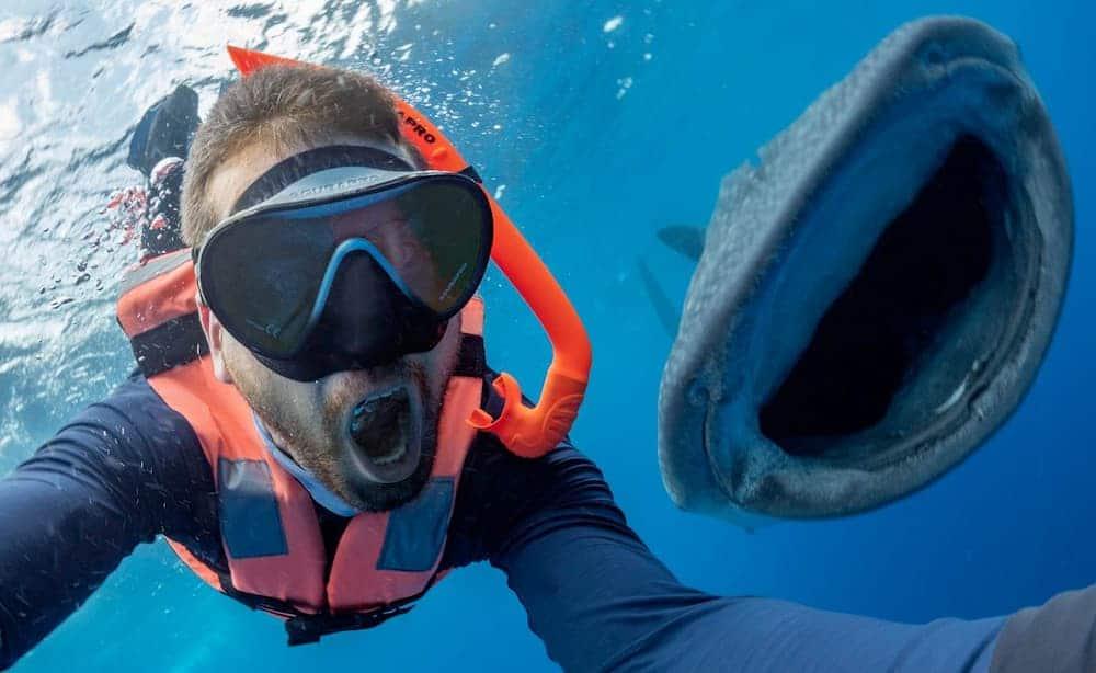 Mira El Momento En El Que Un Tiburón Hace Photobomb En La Selfie De Un Buceador Y Esboza La Misma Sonrisa Enorme