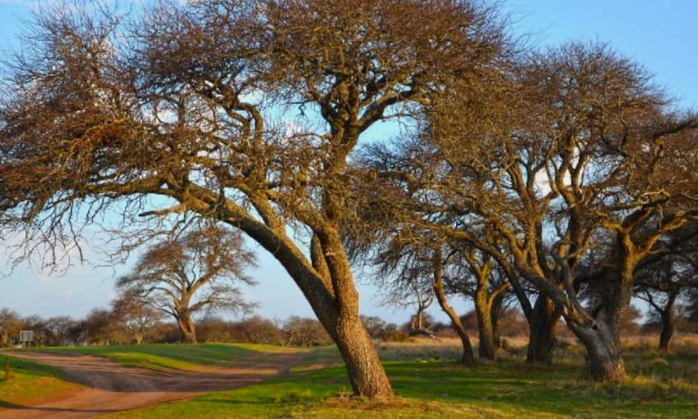 La Mayor Reserva Natural De Caldenes En El Mundo Está En Argentina Y Así Es Como Puedes Visitarla