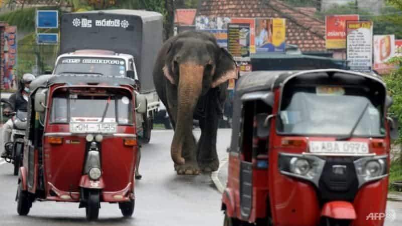 Elefante Caminando Por La Calle