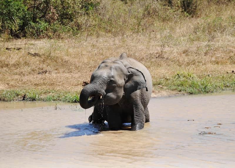 Elefante Bebé En El Agua