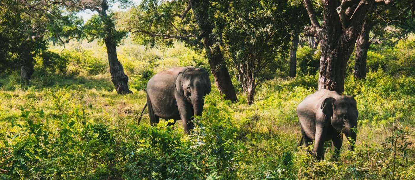 Sri Lanka: quienes beban no podrán montar elefantes