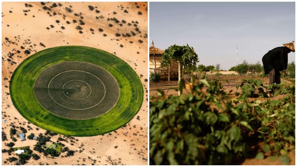 jardines circulares en el desierto del Sahara