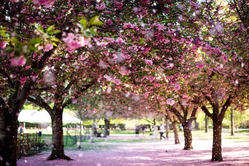 Primavera-En-Nueva-York