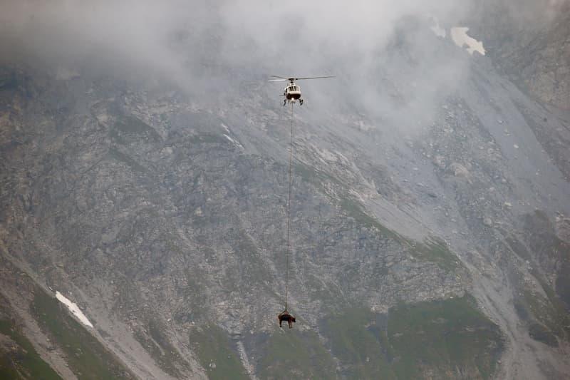 Vaca Siendo Trasladada En Helicóptero