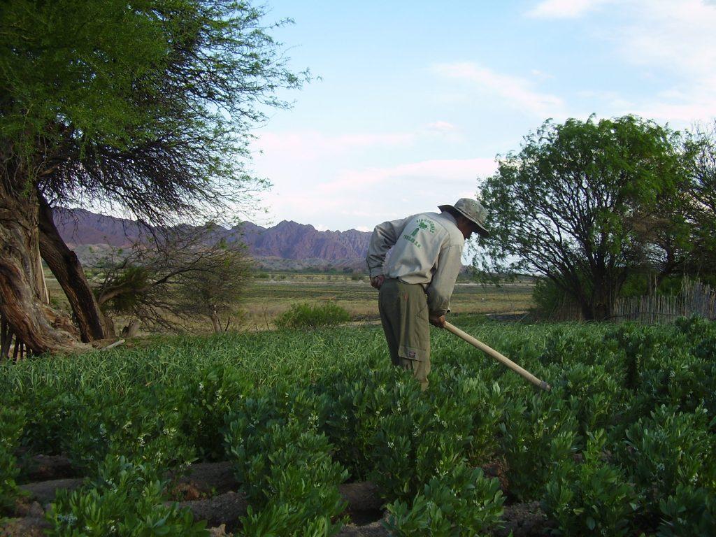 Plantar 1 Millón De Árboles