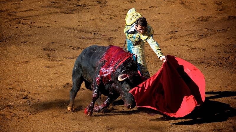 gijon-suspende-corridas-de-toros (1)