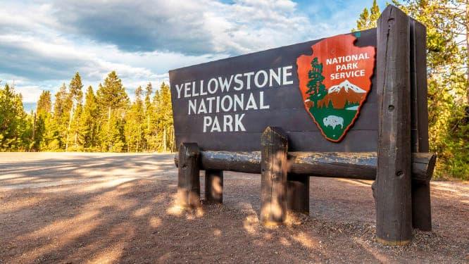 Parque Nacional Yellowstone - Ataque De Bisonte