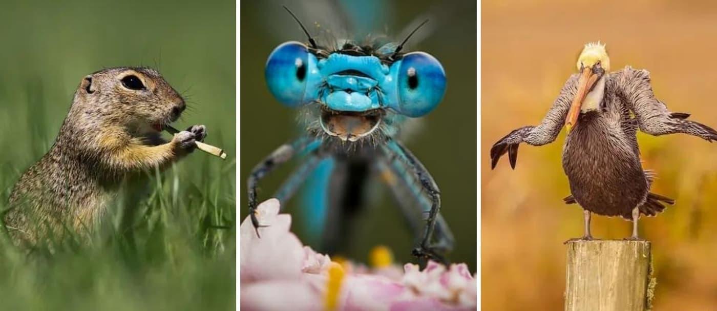 Estos son los finalistas para los Comedy Wildlife Photo Awards 2021 y son geniales
