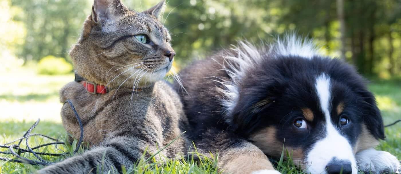 El secuestro de mascotas será considerado un delito en Inglaterra