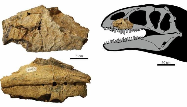 Diagrama De La Ubicación Del Fósil Del Nuevo Dinosaurio