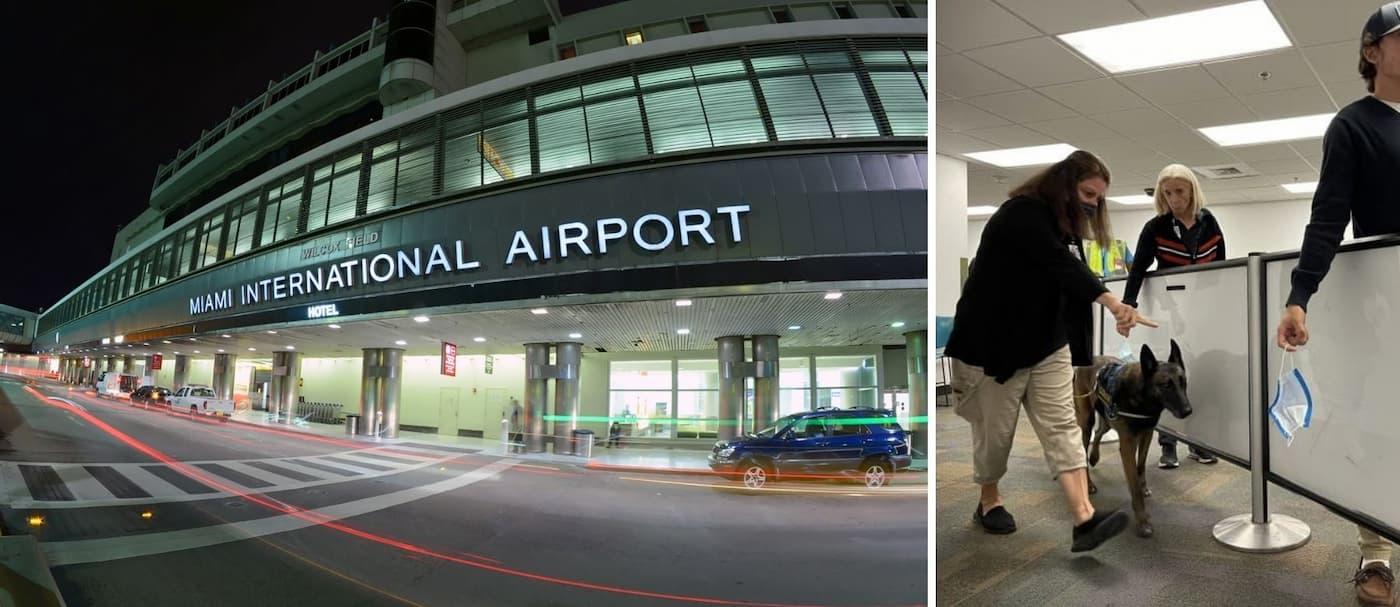 El aeropuerto de Miami está utilizando perros para detectar el COVID-19